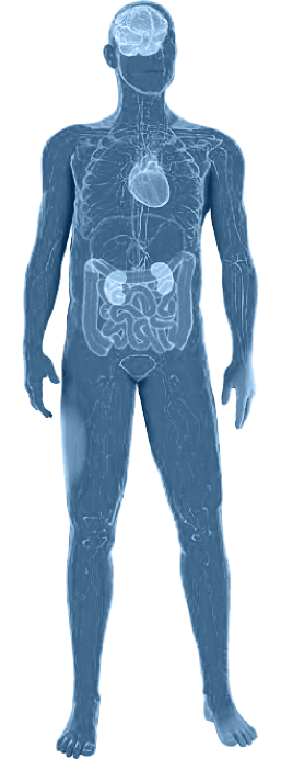 Fabry disease diagnosis in the human body. A body image