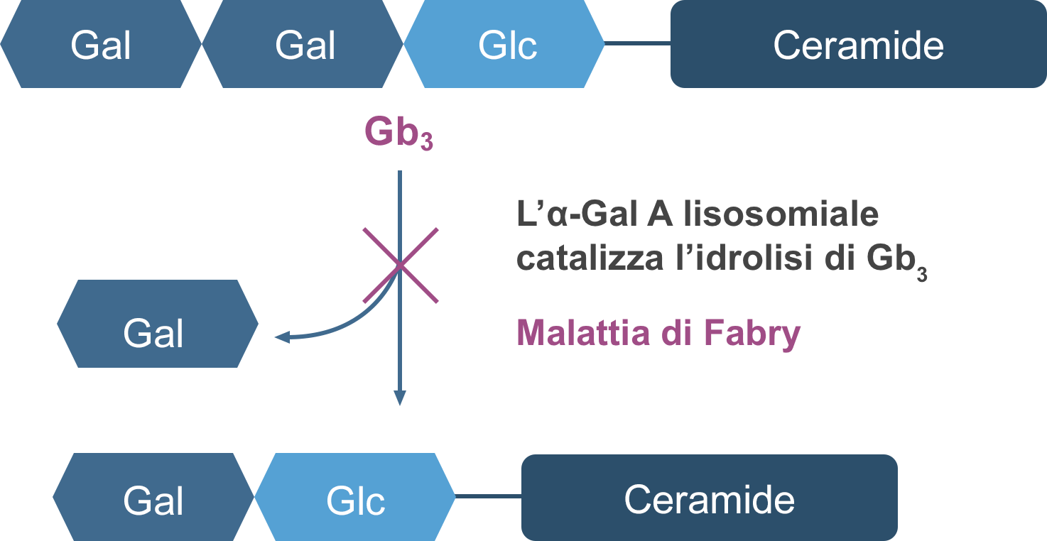 Lysosomal α-Gal A deficiency graphic for Fabry disease